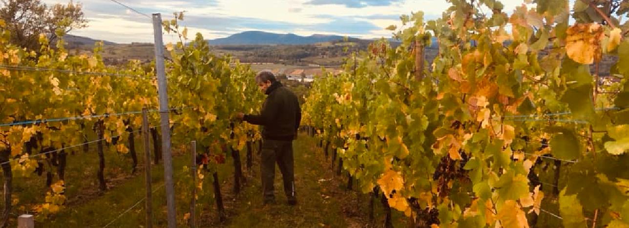 Backert Vignoble au coeur de l'Alsace